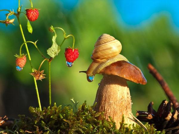 world-of-snails (13)