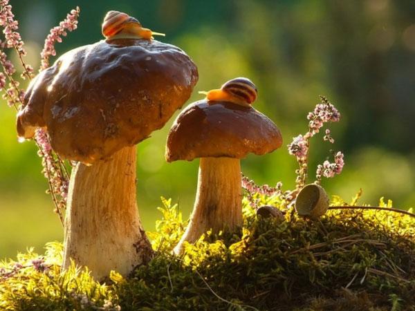 world-of-snails (14)