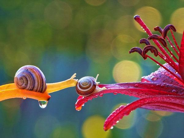 world-of-snails (2)