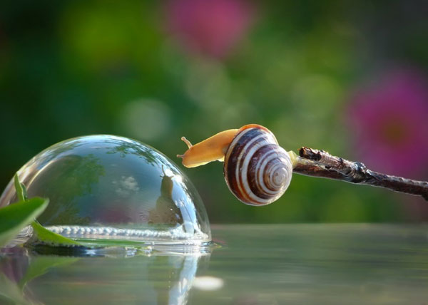 world-of-snails (3)