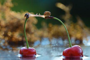 world-of-snails
