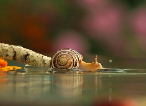 world-of-snails (4)