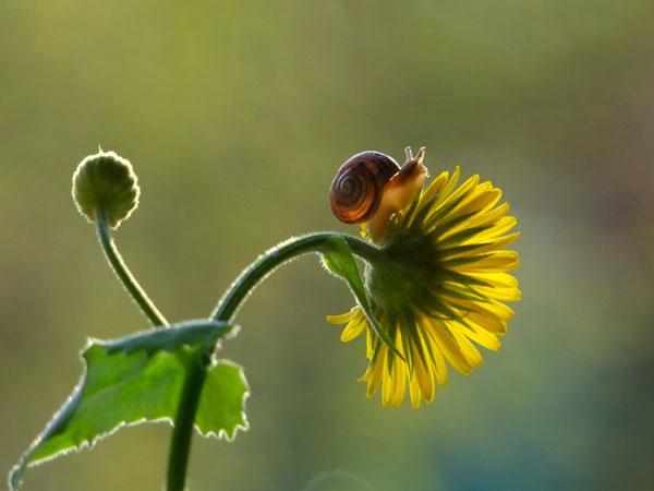 world-of-snails (5)
