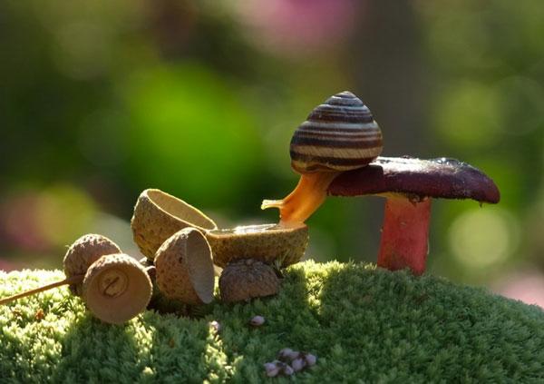 world-of-snails (7)