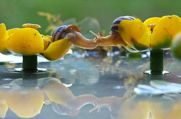 world-of-snails (8)