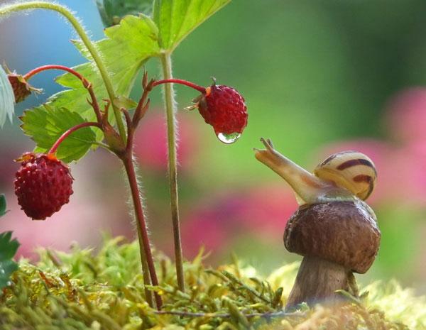 world-of-snails (9)