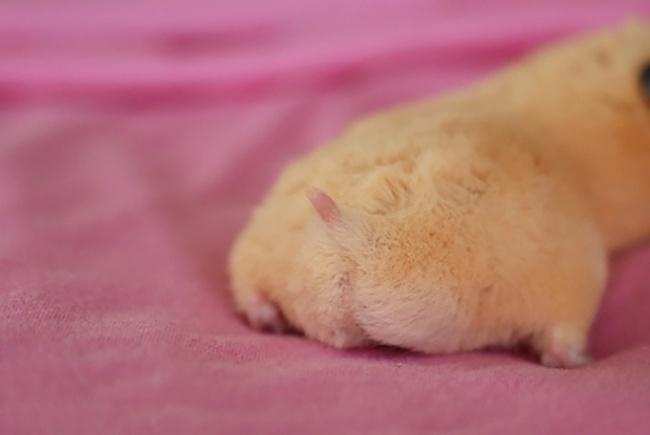 16683215-culo-hamster-japon-japonshop04-1471956797-650-8aafc8ec90-1472031927