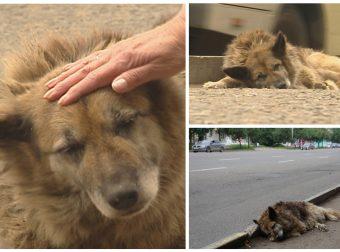 Верность forever: дальневосточный Хатико побил рекорд японского пса-легенды