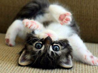 Это самые милые котята в мире! Ну как их не любить?!