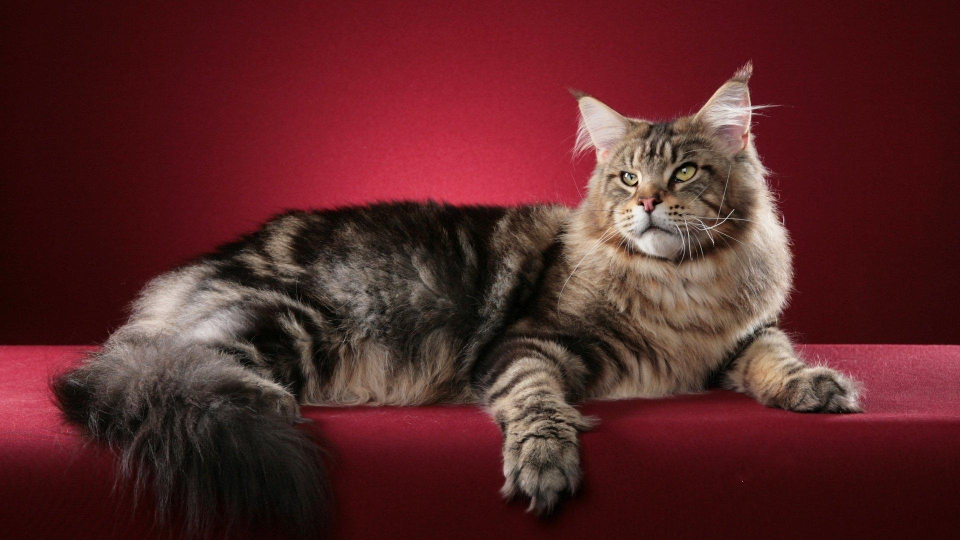 Картинки на рабочий стол кошки черные злая позволяет