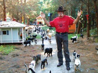 На «Кошачьем ранчо» живут 500 счастливых кошек