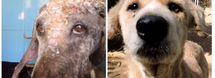 Спасатели нашли собаку в плачевном состоянии, но посмотри, как она выглядит сейчас!