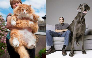 Largest Pets