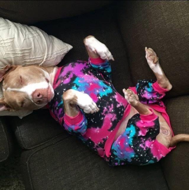 Puppies-in-Pajamas рис 9