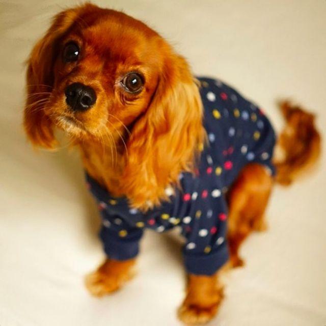 Puppies-in-Pajamas рис 7