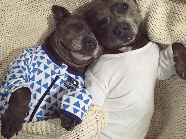 Puppies-in-Pajamas рис 5
