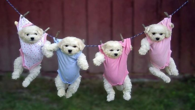 Puppies-in-Pajamas