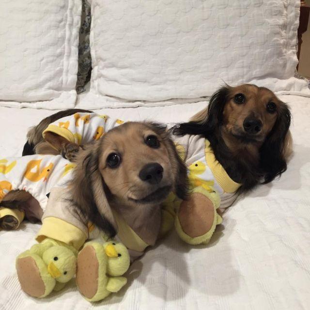 Puppies-in-Pajamas рис 4