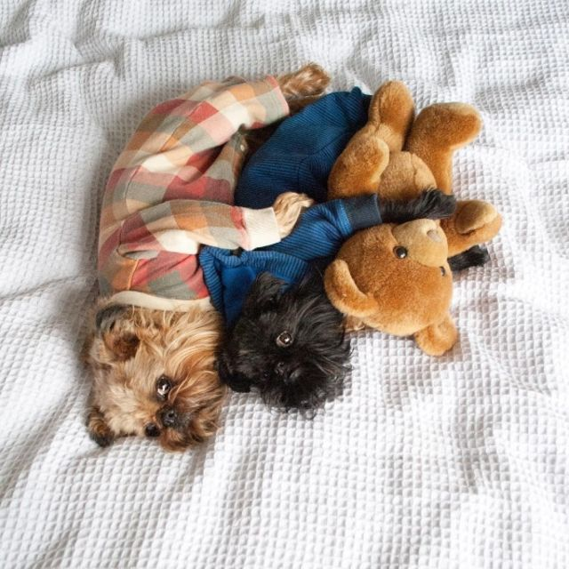 Puppies-in-Pajamas рис 3