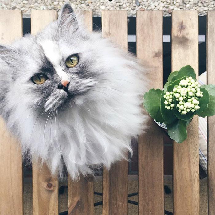 adopted-cat-fur-persian-halloalice-2