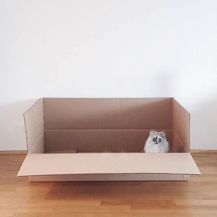 adopted-cat-fur-persian-halloalice-44