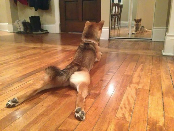 animals-yoga-poses-104-57bef1f3cf930__605