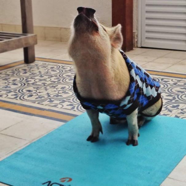 animals-yoga-poses-117-57bee0b918ee6__605