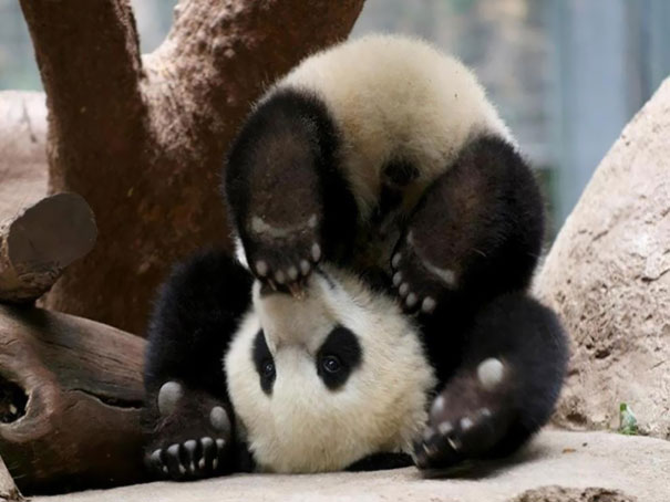 animals-yoga-poses-12-57bae3d584176__605