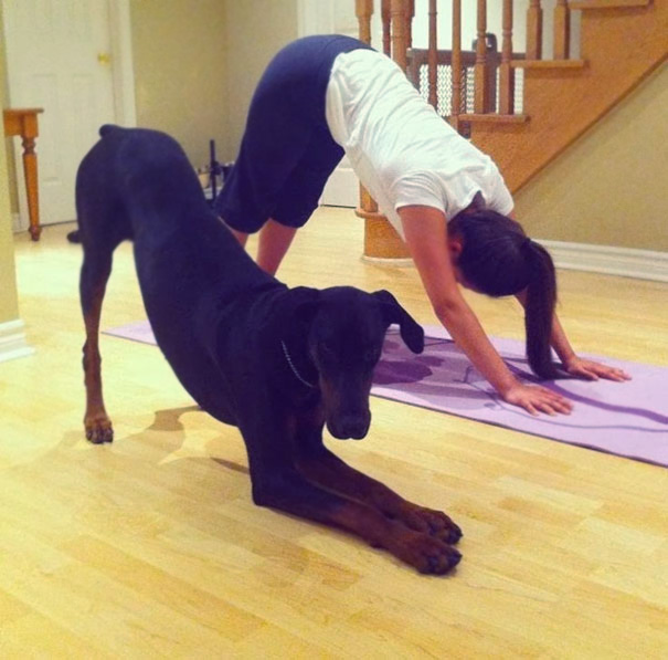 animals-yoga-poses-16-57bae3dba0c76__605