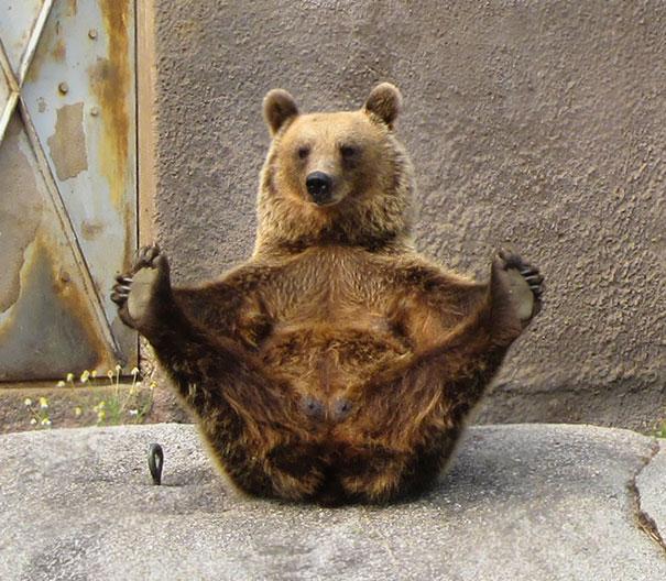 animals-yoga-poses-18-57bae3dfa35b4__605