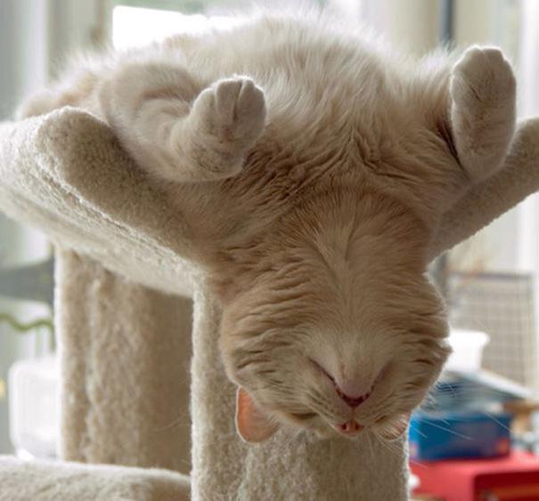 animals-yoga-poses-21-57bae3ea7fc46__605