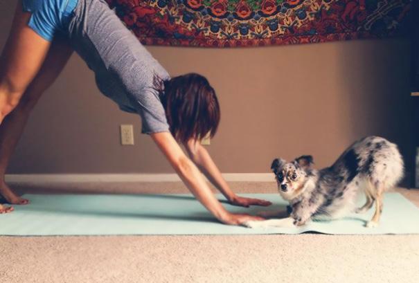 animals-yoga-poses-23-57bae3c20cc0d__605