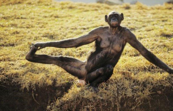 animals-yoga-poses-4-57bae3c9a7285__605