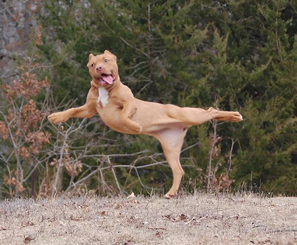 animals-yoga-poses-40-57bc028ddf58f__605
