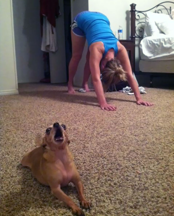 animals-yoga-poses-42-57bc05f3bc17e__605