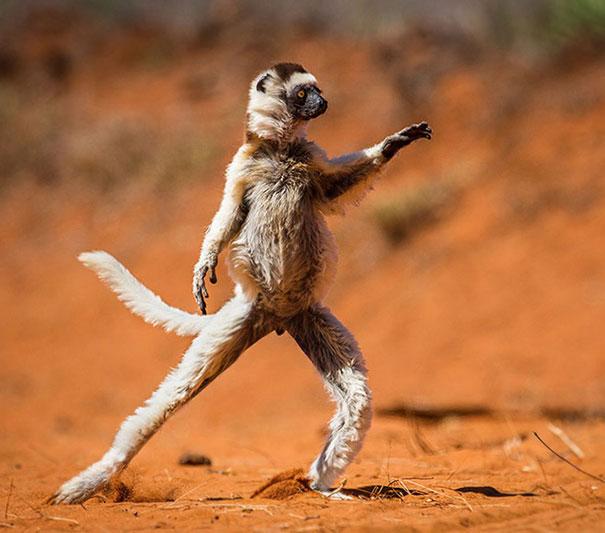 animals-yoga-poses-77-57bd49c92a93f__605