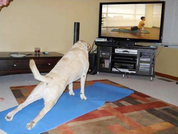 animals-yoga-poses-92-57bd6f36c945e__605