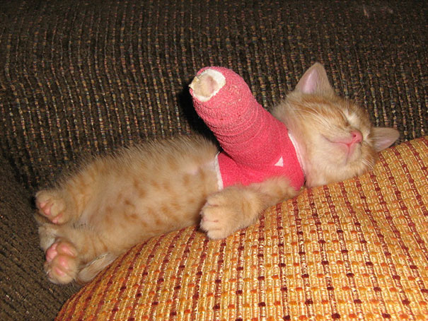 cat-broken-arm-cast