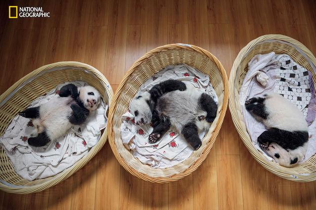 foto-panda рис 2