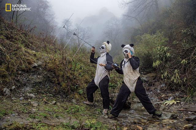 foto-panda рис 6