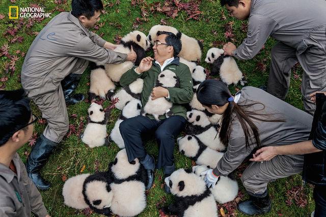 foto-panda рис 5