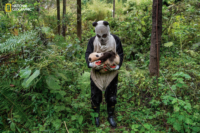 foto-panda рис 4
