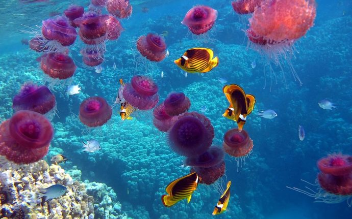 jellyfish рис 8
