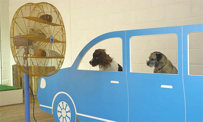 world-first-dog-art-exhibition7