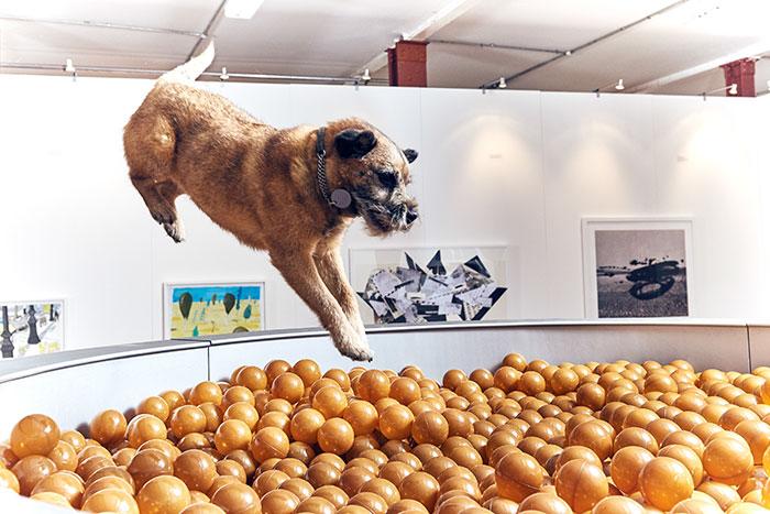 world-first-dog-art-exhibition4