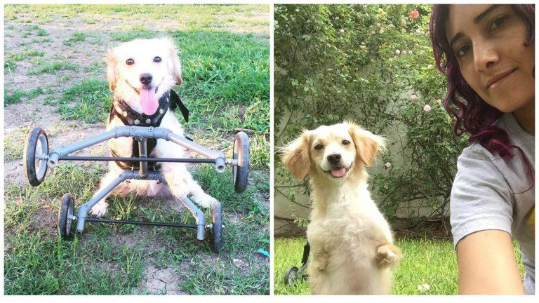 disable dog