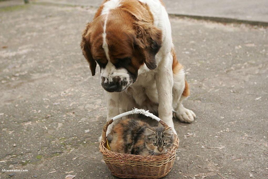 adorable-dog-s1024x683-450056-1020