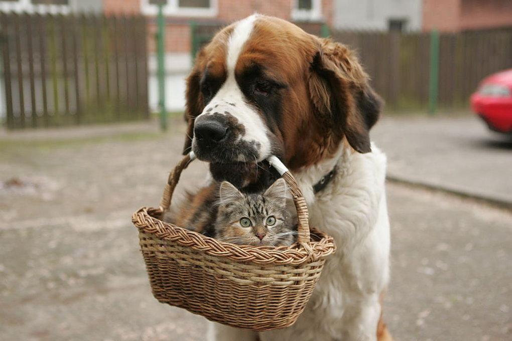 adorable-dog2-s1024x683-450058-1020-1