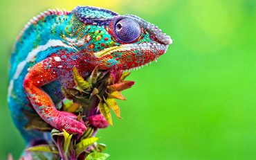 colorful-animals-3