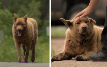 dog-4-mile-walk